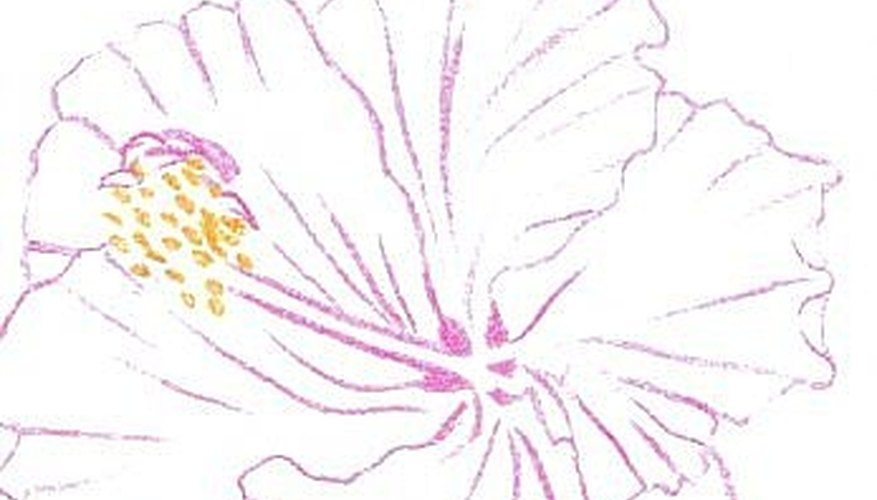 Hibiscus sketch traced in Magenta and golden yellow on watercolor paper