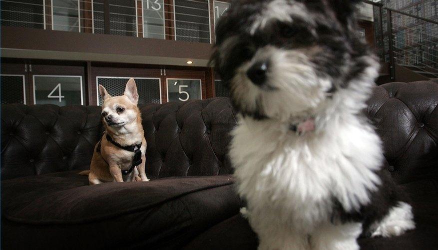 Pet Emergency Room Taxes