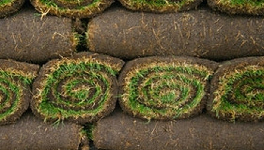 Sod will either come rolled or in squares.