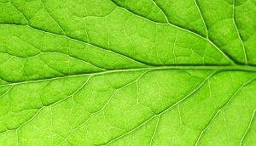 ¿Cómo afecta la oscuridad el crecimiento de las plantas? | Sciencing
