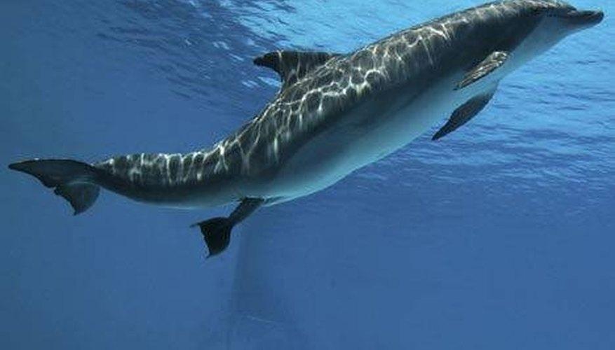 Female dolphin giving birth