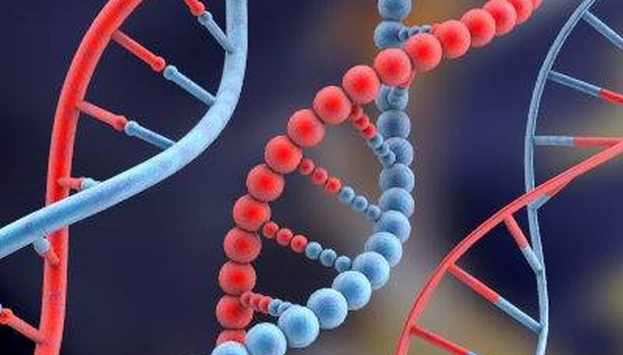 What is the Subunit of DNA Called?
