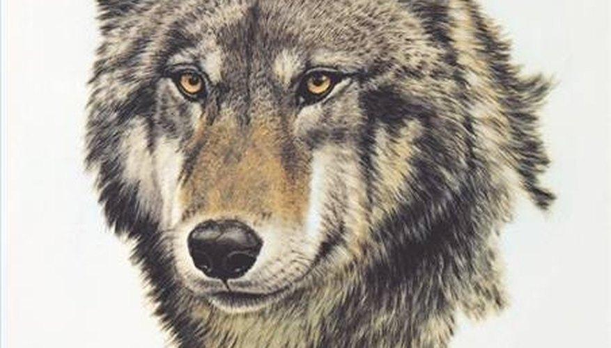 Draw wolf heads