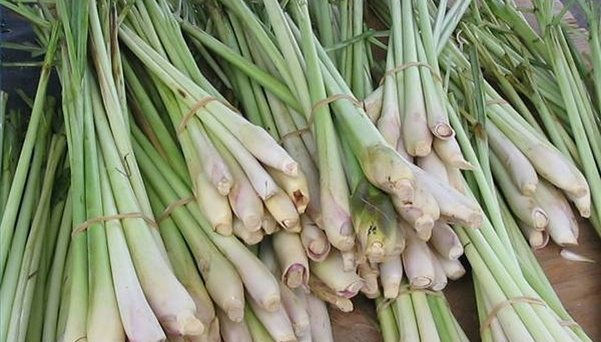 Lemongrass is a fragrant and subtle herb used in Asian cooking