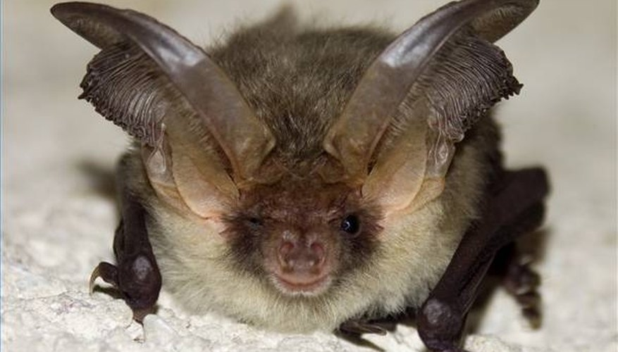 Commercial devices using ultrasound have not been shown to repel pests including bats.