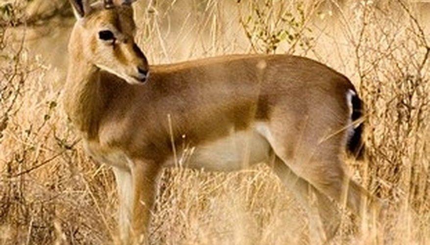 Animals of the Thar Desert | Sciencing