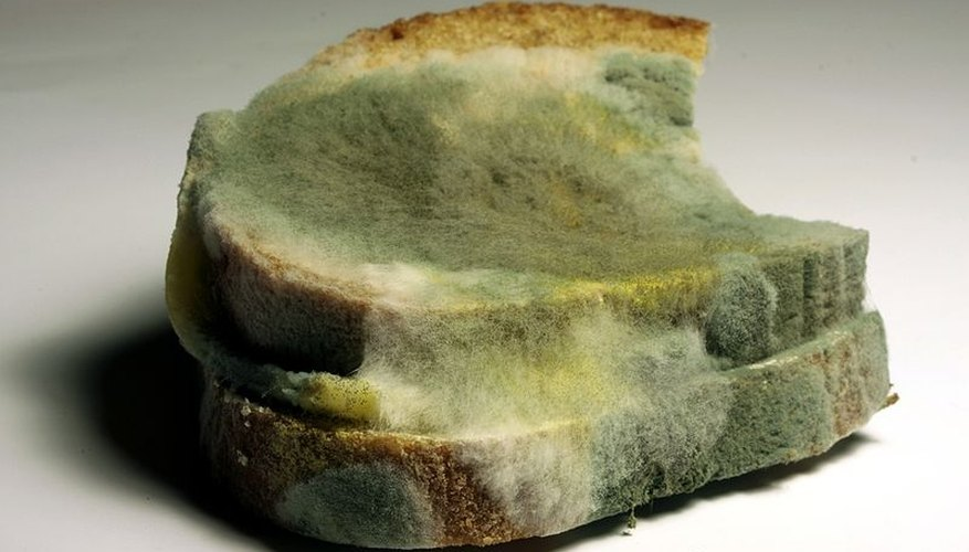We All Know What Hens If You Leave Bread Out For Too Long Mold Gross Why Does This Hen How And Are There Any Factors Can