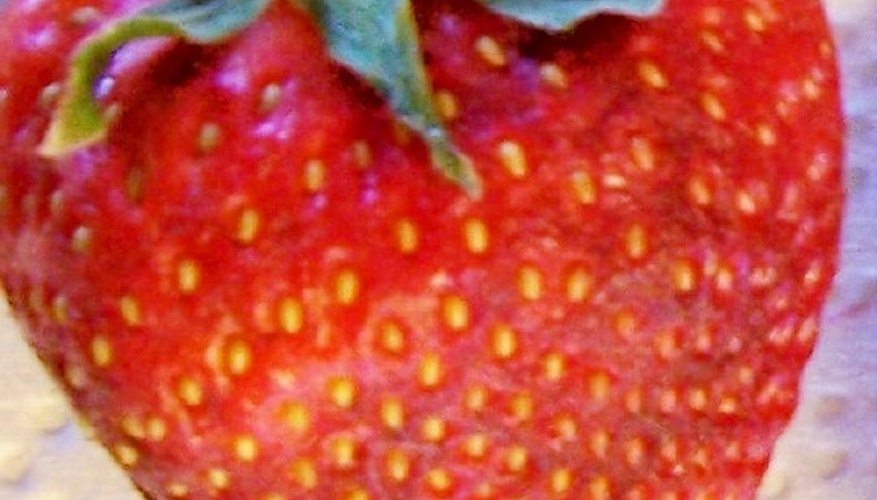 A seed-covered berry will likely end up in an animal's digestive system.