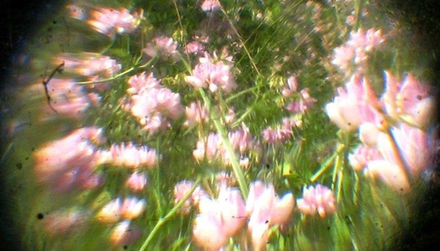 Floral scents are popular masking fragrances