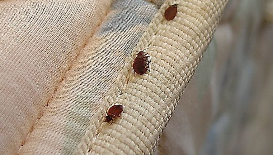 Tell If You Have Bed Bugs