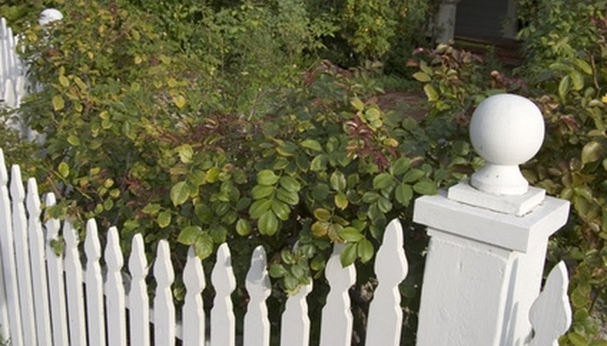A fresh coat of white paint on a fence adds significant aesthetic appeal to your home's exterior.