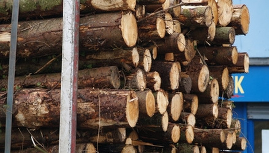 Bioengineered eucalyptus for lumber is growing in Florida.