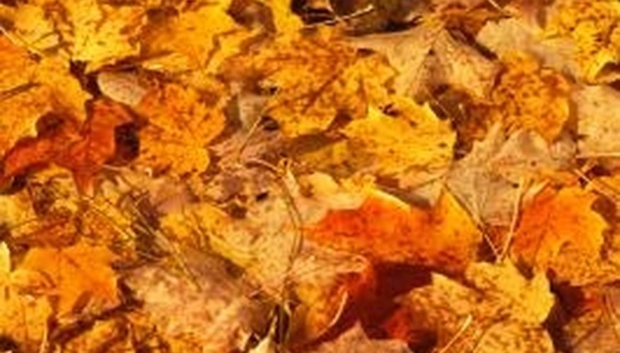Autumn leaf piles are excellent additions to the compost pile.