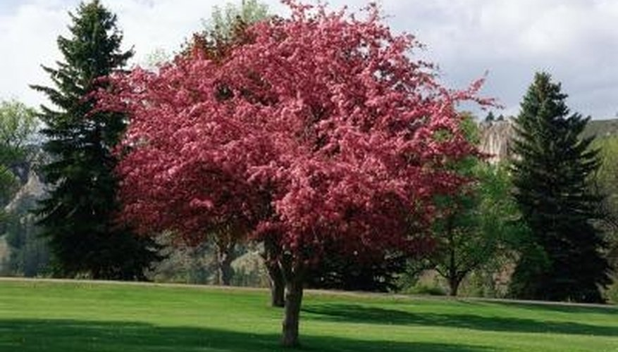 Some varieties of crabapple trees thrive at high altitudes.