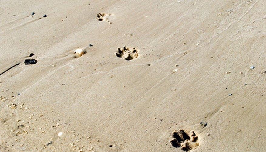 Identifying Big Cat Tracks