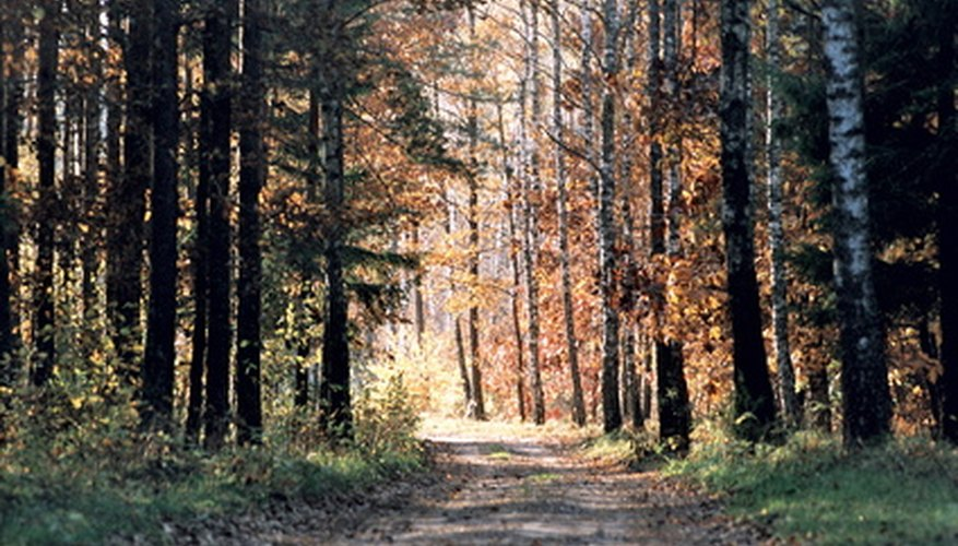 Conifer forests are found throughout Canada and northern Europe.