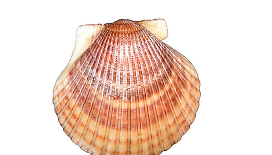 The differences between clams scallops sciencing - Difference shell house turnkey ...