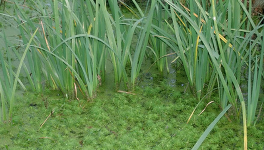Marsh vegetation reverses soil erosion and filters pollutants before they reach freshwater streams.