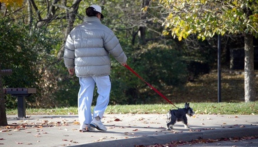If you can walk a dog, you can make money in Chicago.