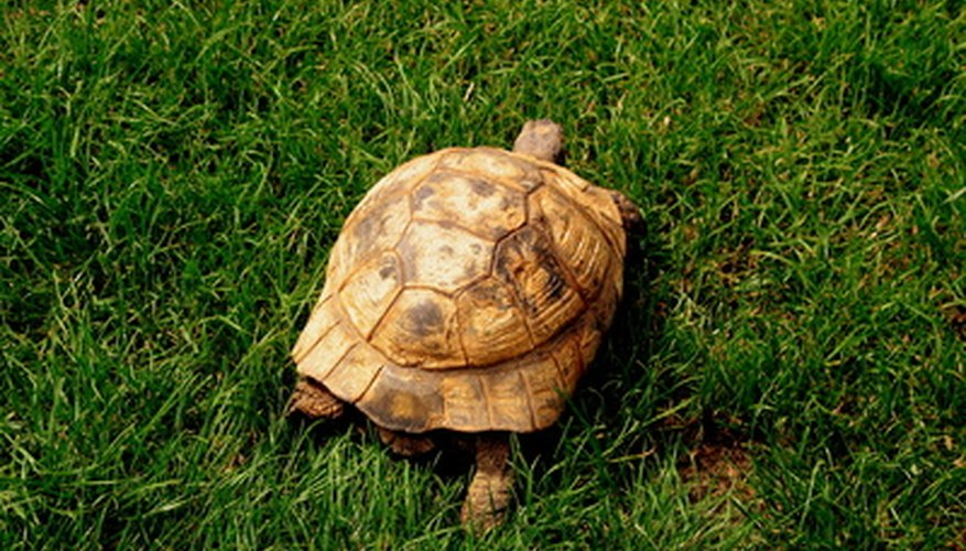 Relocate any turtles you see meandering around your backyard.