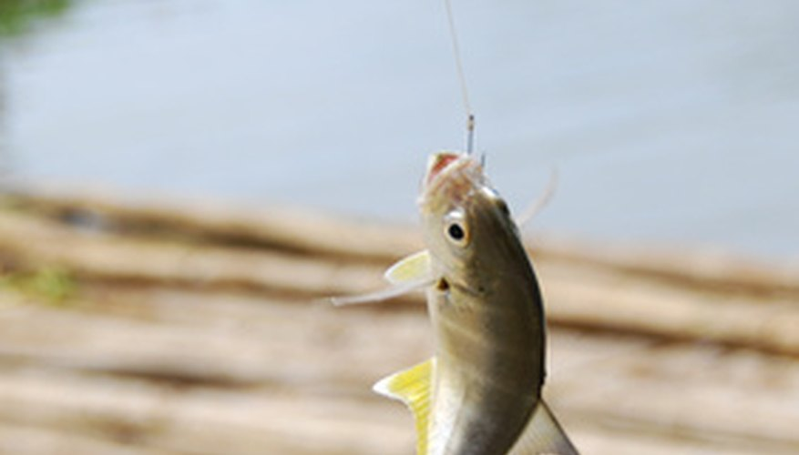 Opening a fishing store can be a profitable way to combine a love of fishing and a business idea.