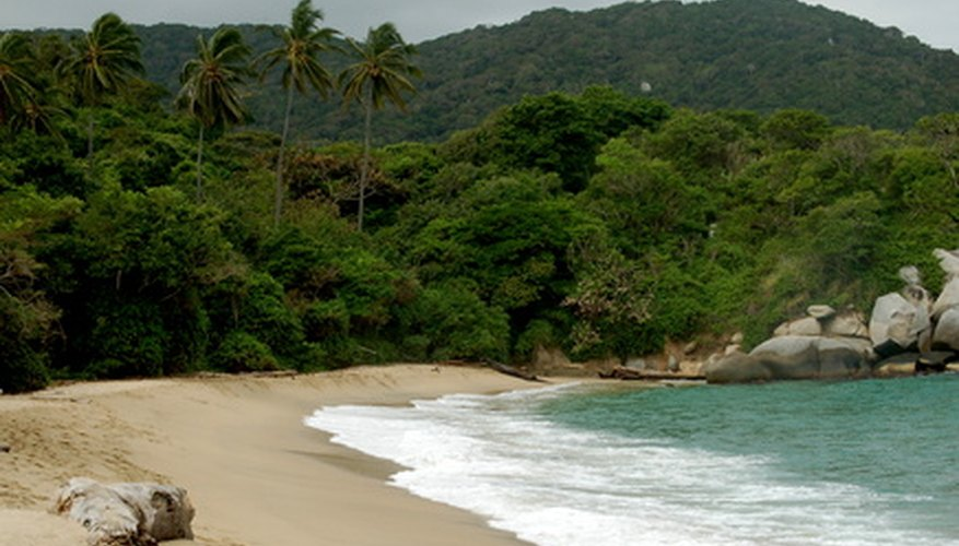 Cumbia emerged in the northern coast of Colombia, where slaves who followed the Yoruba religion were brought to work plantations.