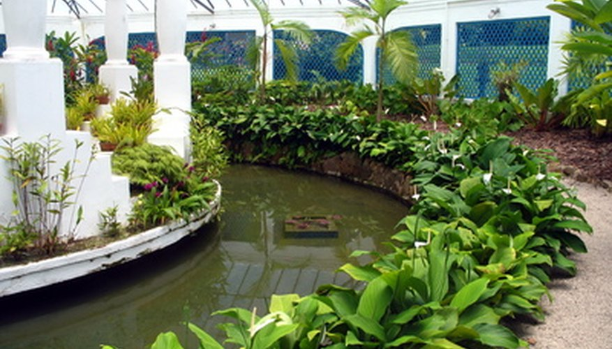 A hydroponics system requires a greenhouse for optimal conditions.