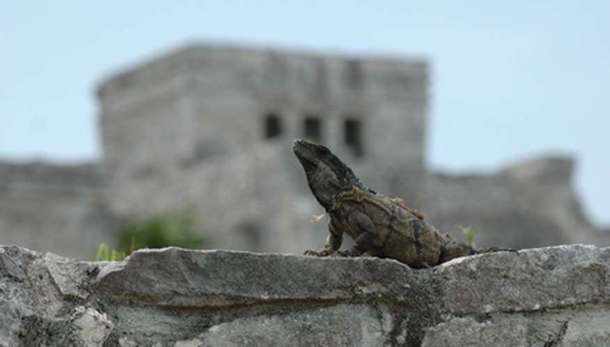 Reptiles provide a check on the overpopulation of small animals.