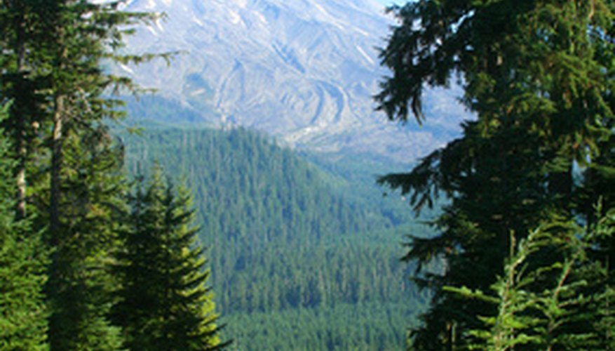 Helenite's range of colors reflects the verdant hues of the forest surrounding Mount St. Helens.