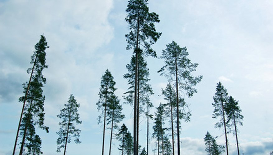 Forestry practices can range anywhere from doing nothing to removing all trees.