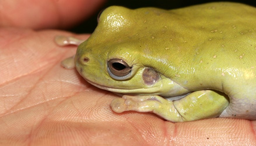 Frogs have skins that are thin enough to allow gases to pass through the skin.