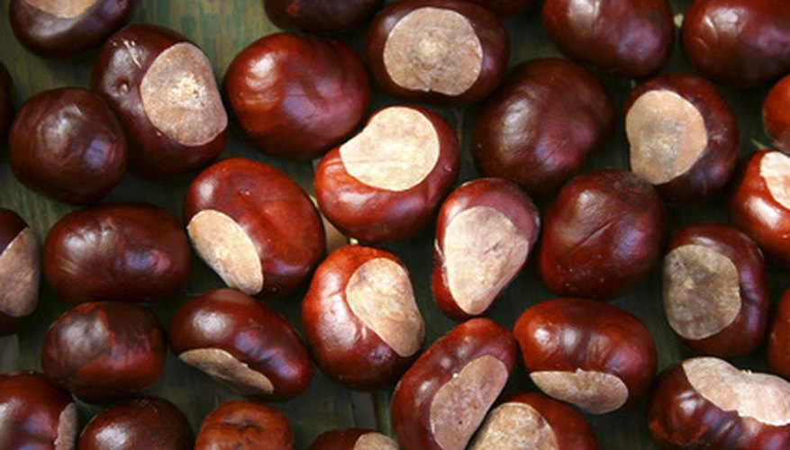 Chestnuts have smooth, reddish-brown shells.