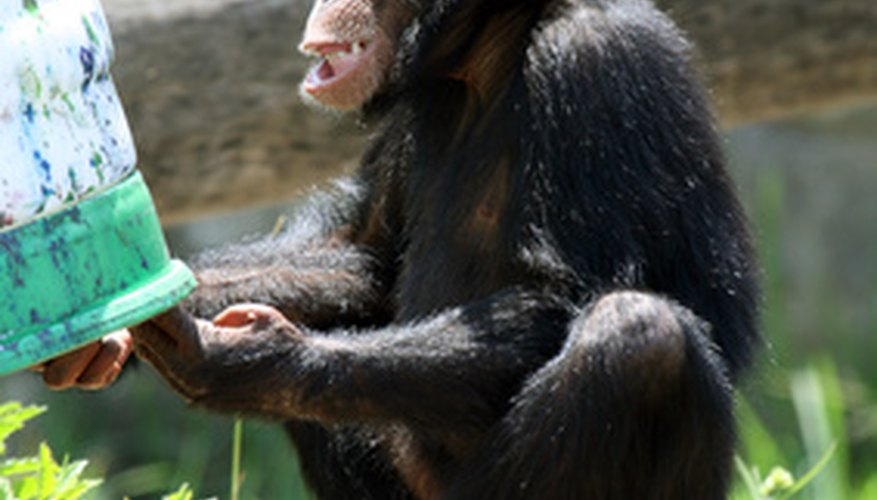 Primate and human hands have similarities and differences