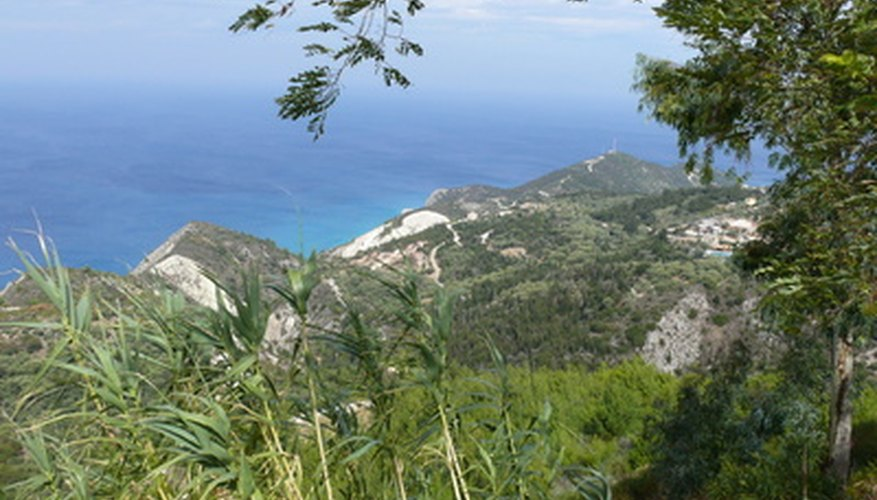 Much of Greece's flora are used in Greek mythology.