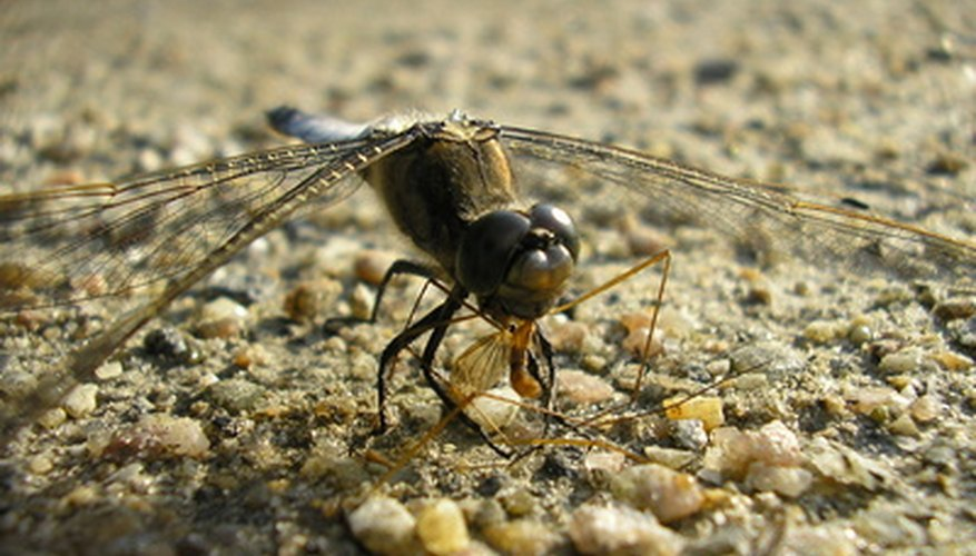 Most insects are mainly adapted to live on land.