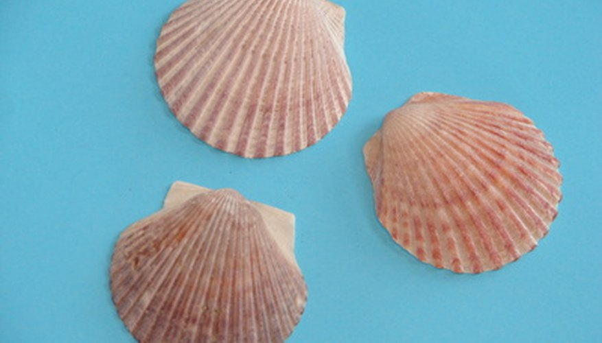 Clam shells crafts can be fun and inexpensive.