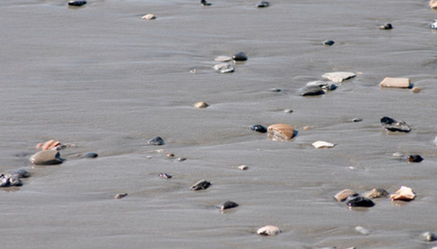 An abundance of sea life can be found on the beach at low tide.