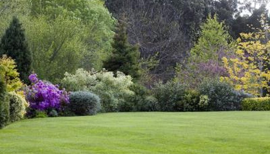 Flowering dwarf trees and shrubs grow at the edge of a lawn