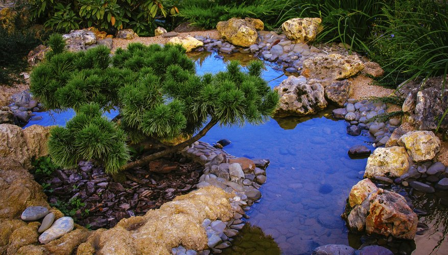 A pond or water feature serves as a focal point in your yard.