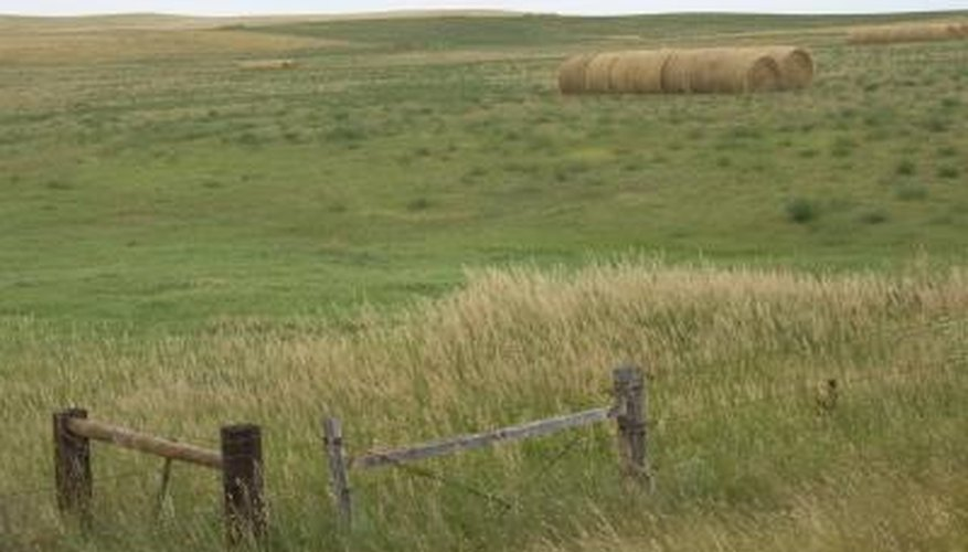 America's prairies are temperate grasslands.