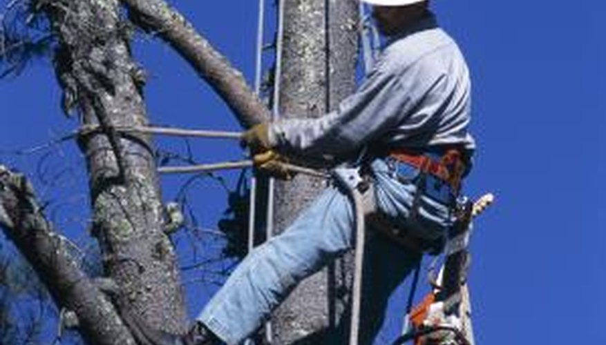 Tree trimmers must be qualified to work around electrical sources.