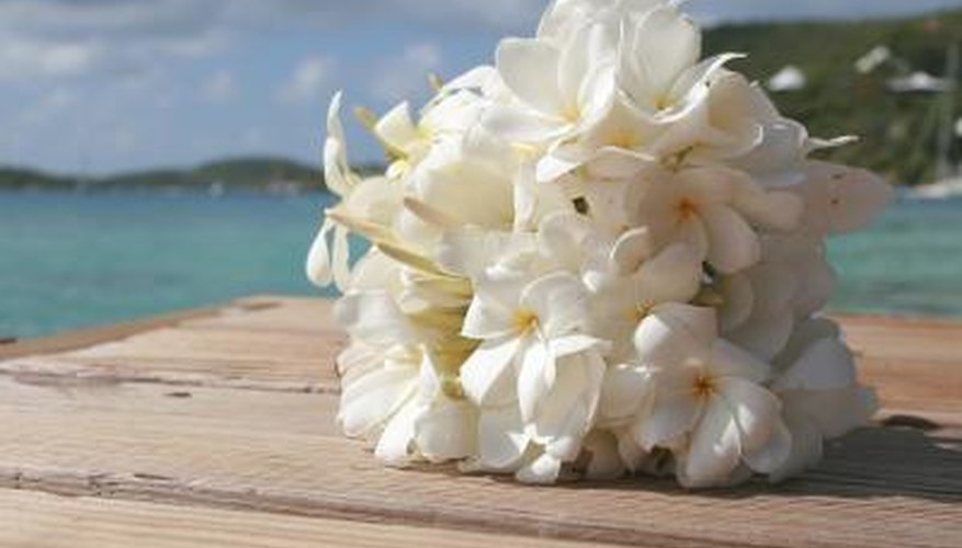 Tropical wedding bouquet of frangipani flowers