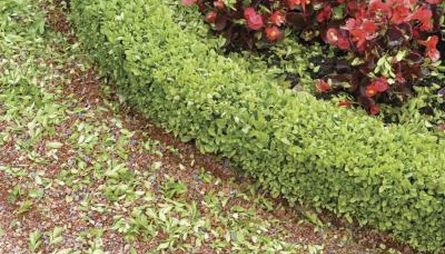 Boxwood shrubs give the garden a formal look.