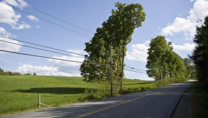 Local power companies are responsible for keeping most trees out of electric wires.