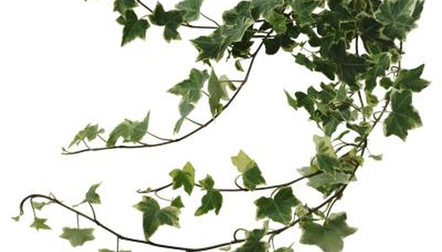 Create a shade canopy using climbing vines.