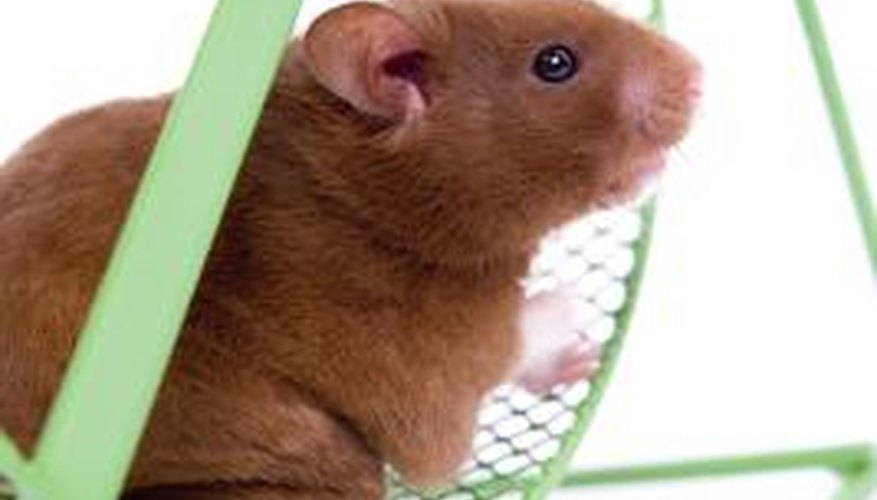 Hamster bedding can remove odor from the inside of boxing gloves.