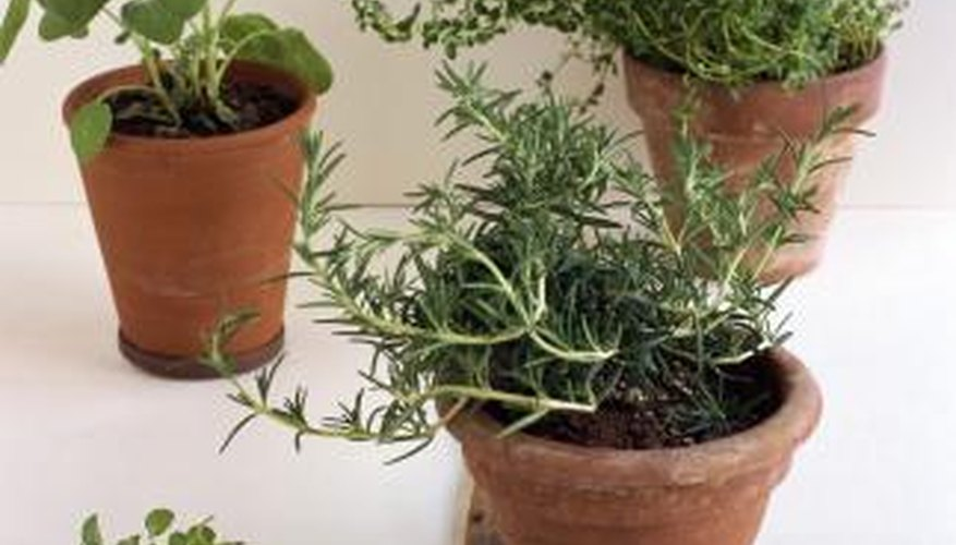 When planning a container garden, select small varieties of plants.