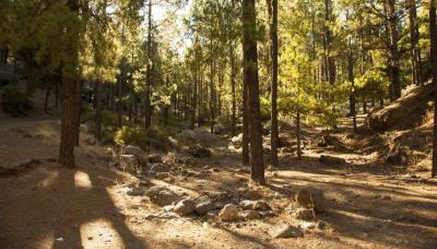 types of forests in the world pdf