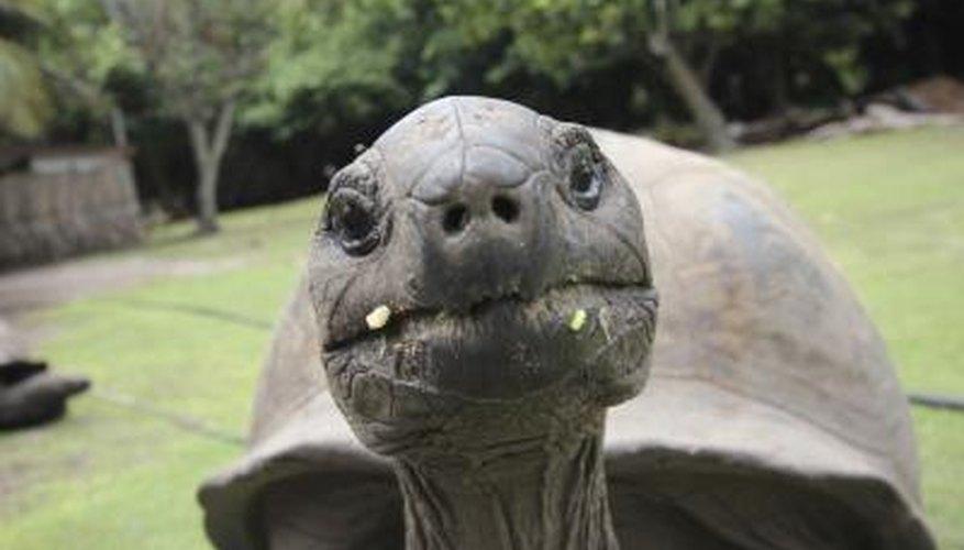 Tortoises live on dry land.