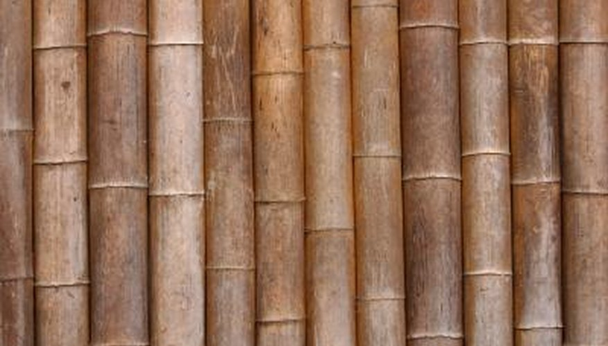 Bamboo is an excellent choice for planting around your pool.